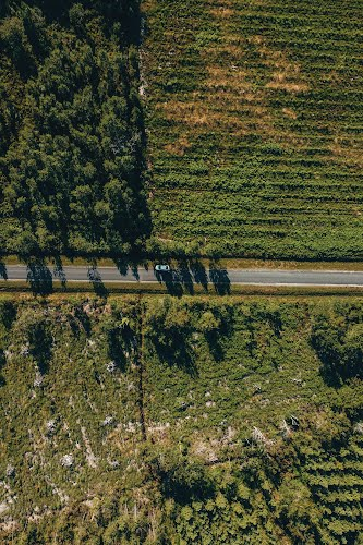 aerial view of a vineyard poster collective